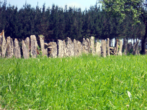 stone fence in Galicia